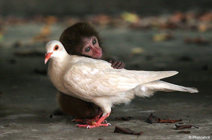 Monkey nd Dove