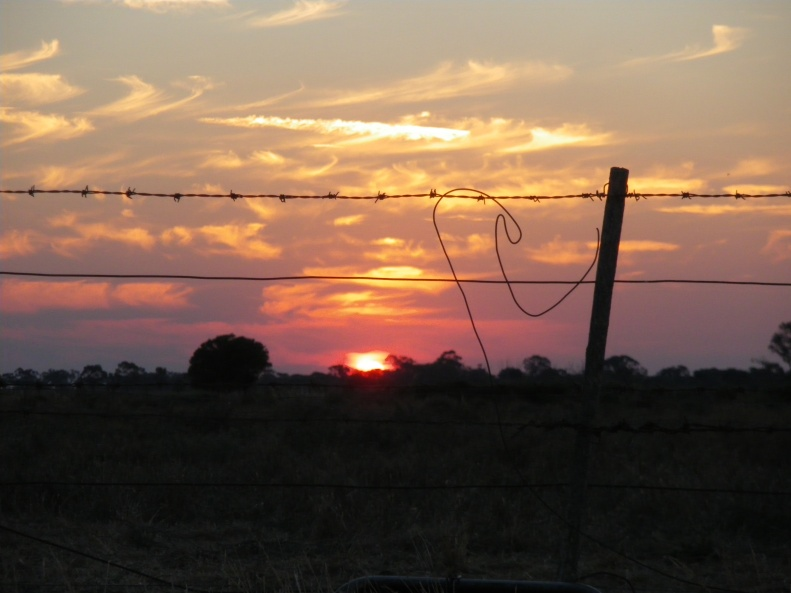 Sunset_fence